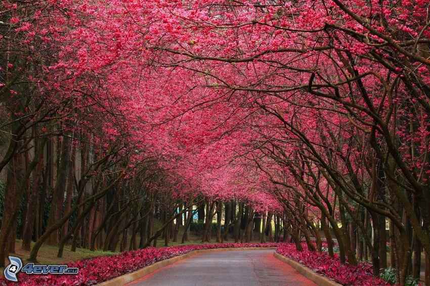 alberi in fiore, parco, marciapiede, fiori rossi