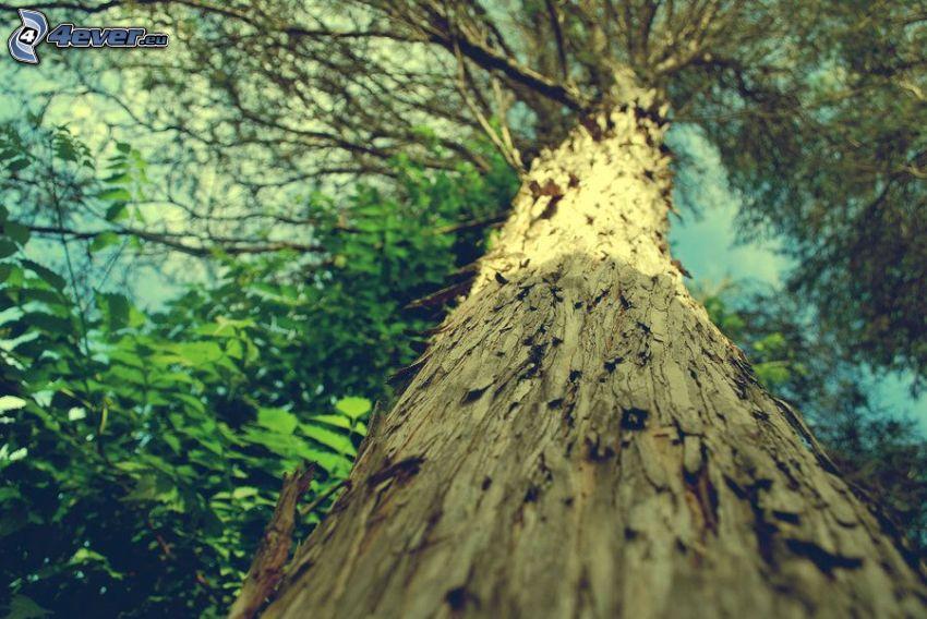 albero, corteccia di albero