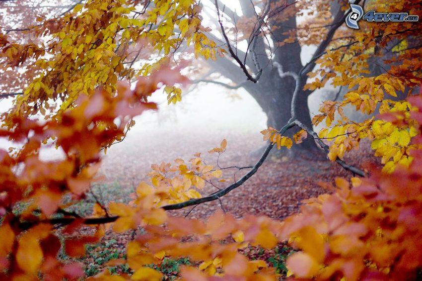 albero giallo