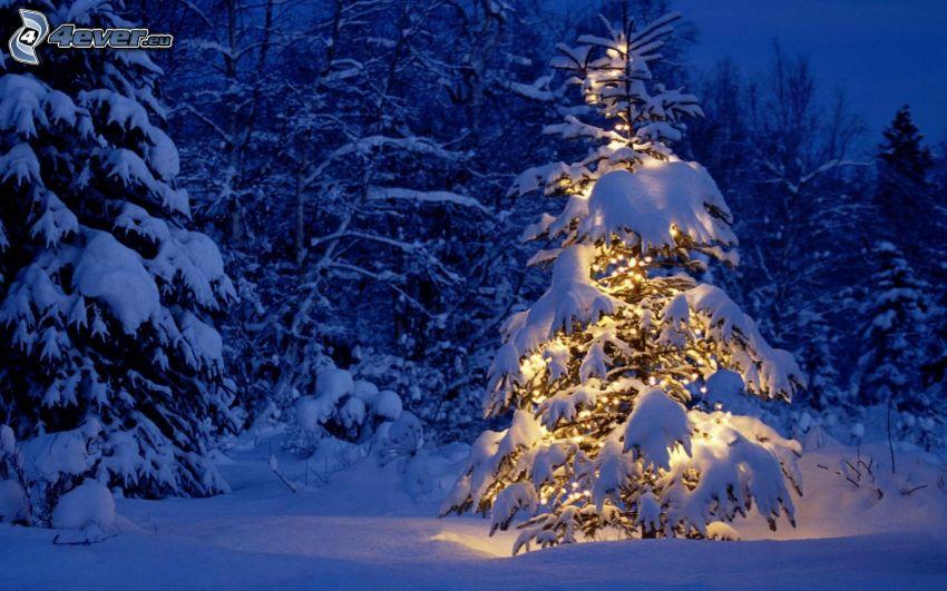 albero illuminato, alberi coperti di neve