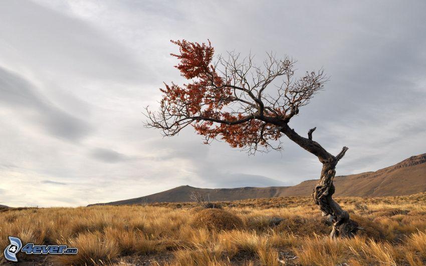 albero solitario, albero secco, prato
