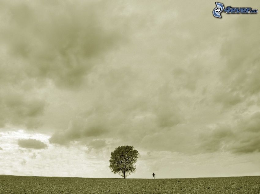 albero solitario, cielo, prato