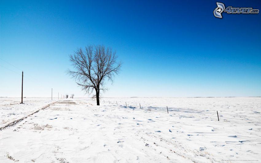 albero solitario, neve