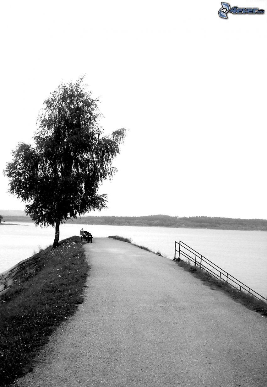 albero sopra un lago, strada, diga, panchine