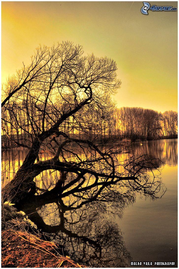 albero sopra un lago, tramonto, serata all'alba, superficie d'acqua calma