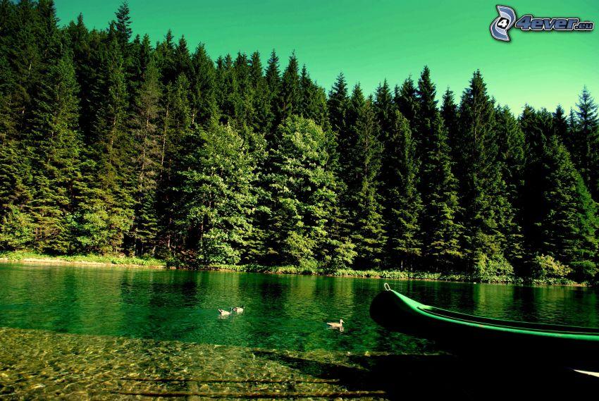 bosco di conifere, il fiume, barca in riva al mare