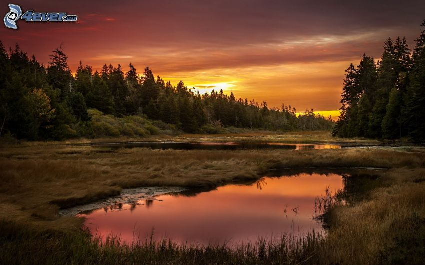 bosco dopo il tramonto, pozzanghere, cielo di sera