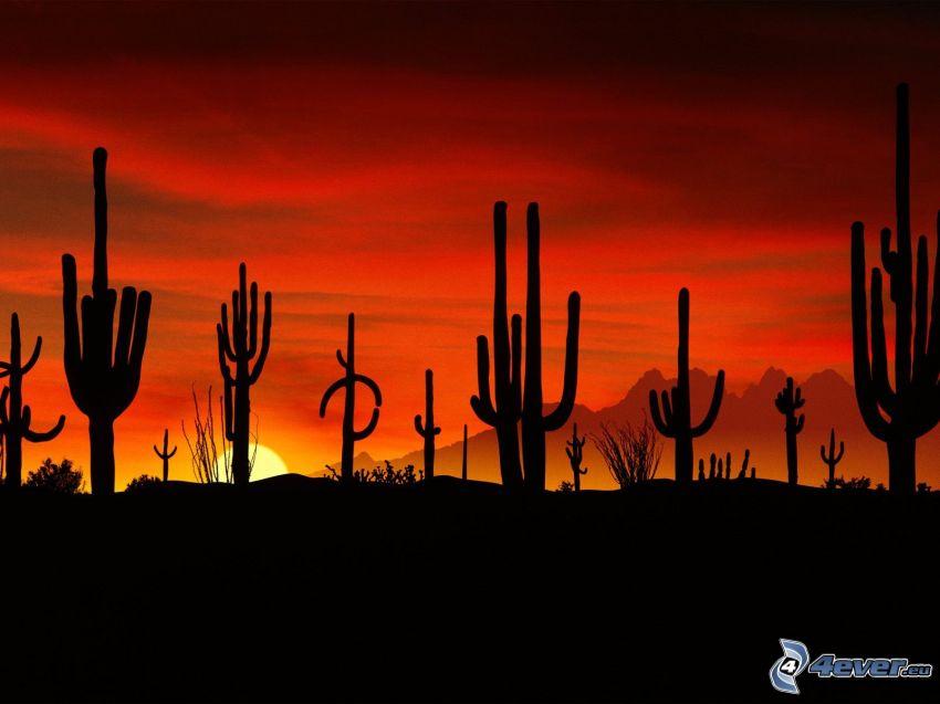 cactus, tramonto