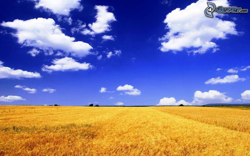 campo di frumento, nuvole