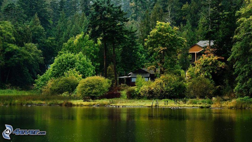 casa in riva al lago, foresta