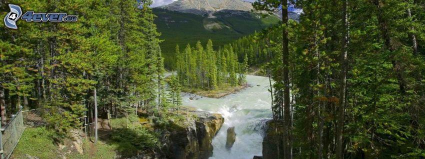 cascata, alberi
