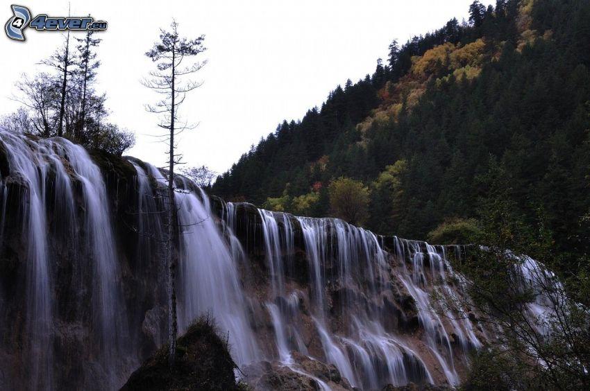 cascata, alberi di conifere