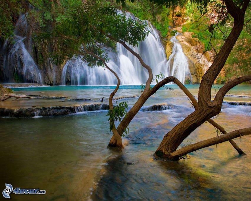 cascata, albero