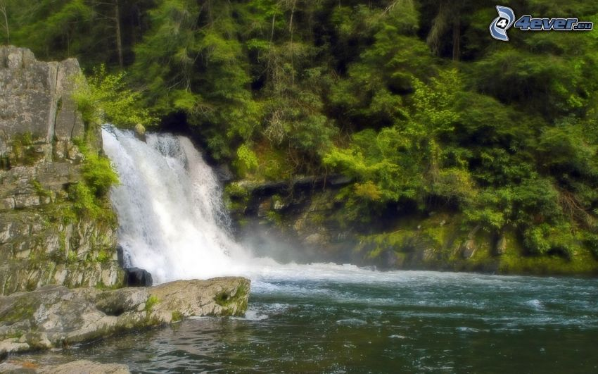 cascata, foresta