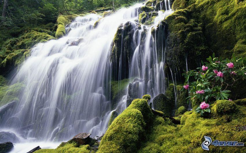 cascata, muschio