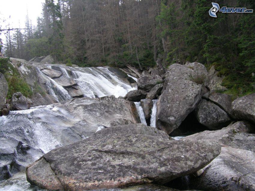 cascata, rocce, foresta
