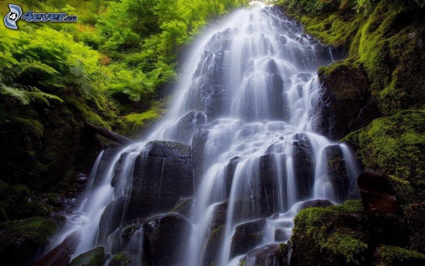 cascata, verde