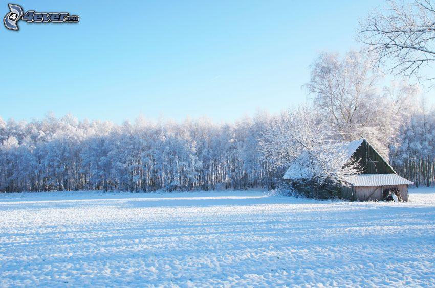 chalet coperto di neve, prato nevoso, bosco innevato