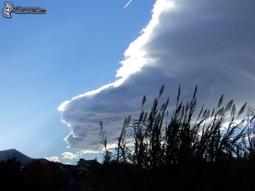 nuvole, fili d'erba