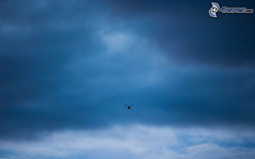 sagoma dell'uccello, nuvole scure