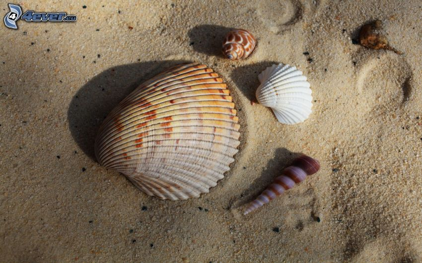 conchiglie, sabbia