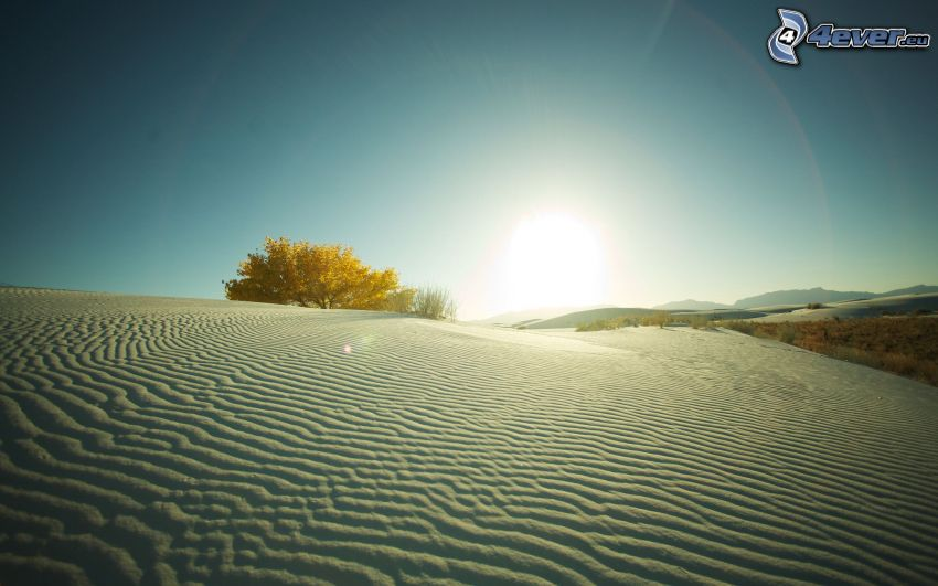 deserto, dune di sabbia, albero solitario, tramonto