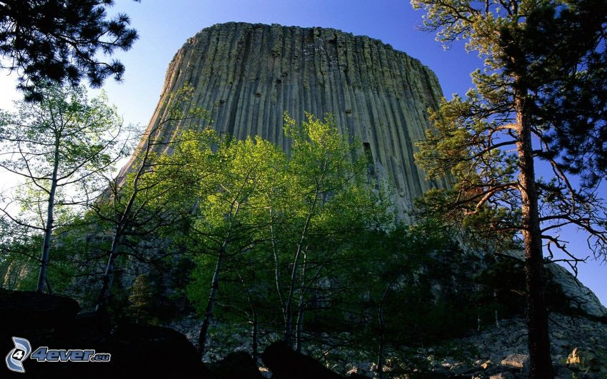 Devils Tower, roccia, alberi