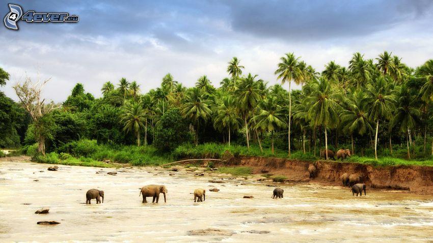elefanti, palme