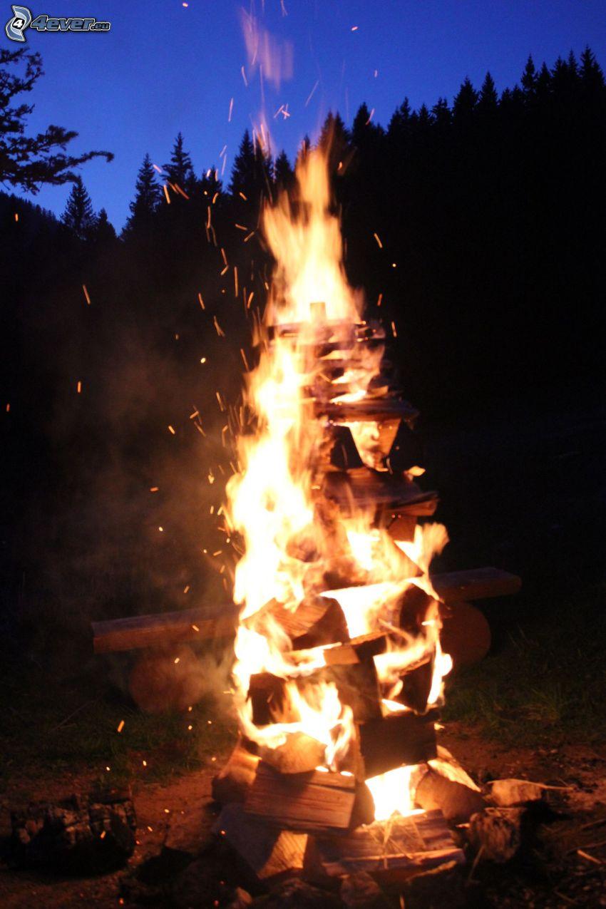 falò, fuoco, silhouette di una foresta