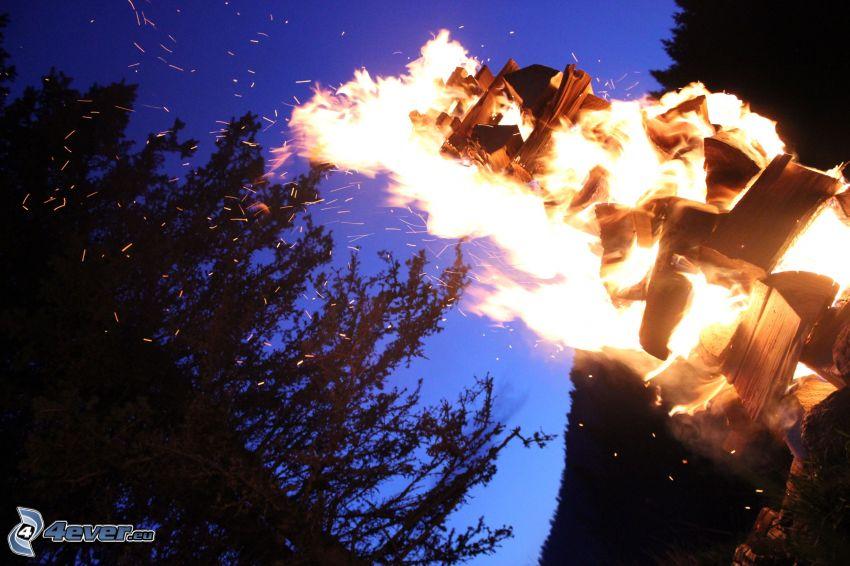 falò, fuoco, siluetta d'albero