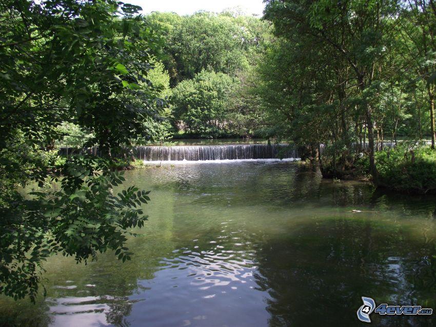 fiume nella foresta, cascata
