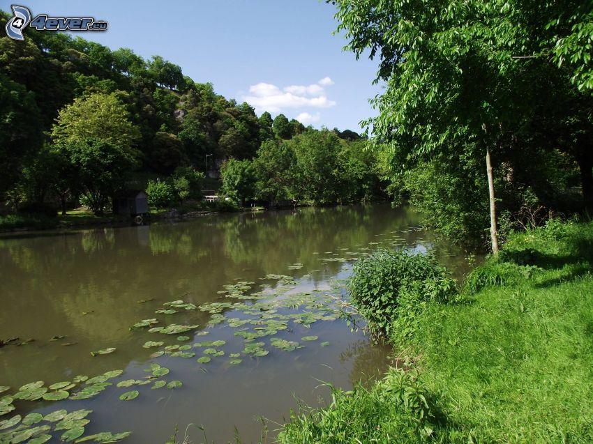 fiume nella foresta, ninfee