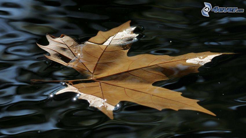 foglia d'autunno, acqua