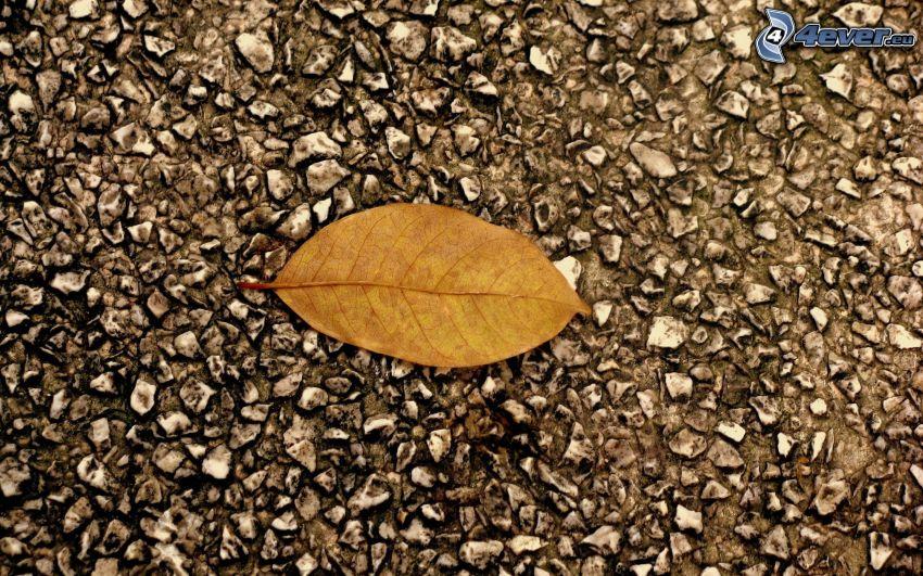 foglia d'autunno, asfalto