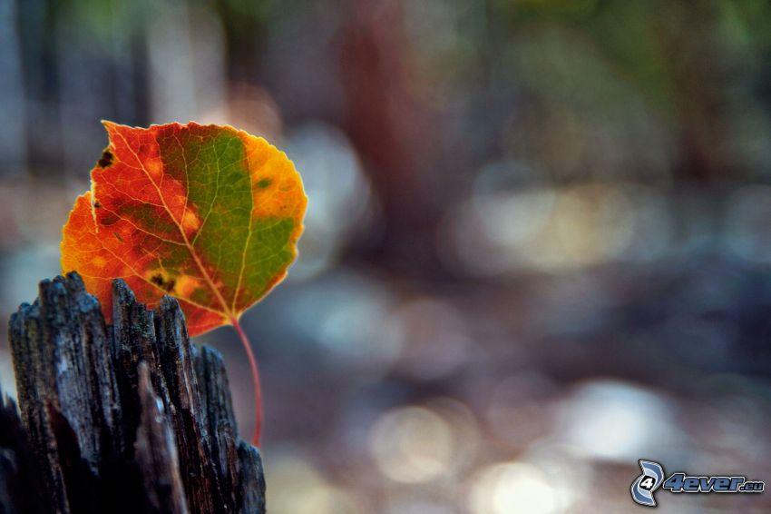 foglia d'autunno, legno