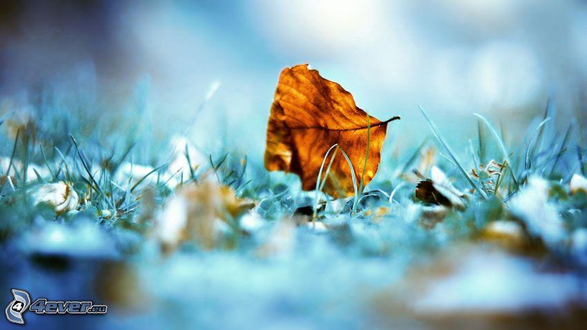 foglia d'autunno, l'erba