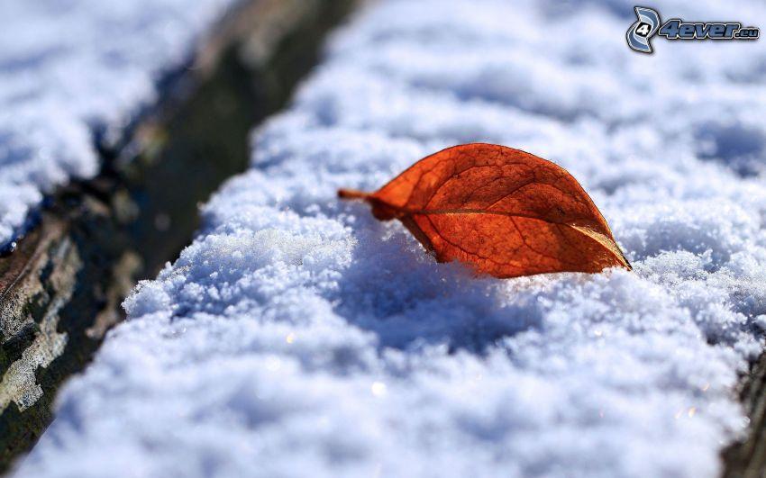 foglia d'autunno, neve