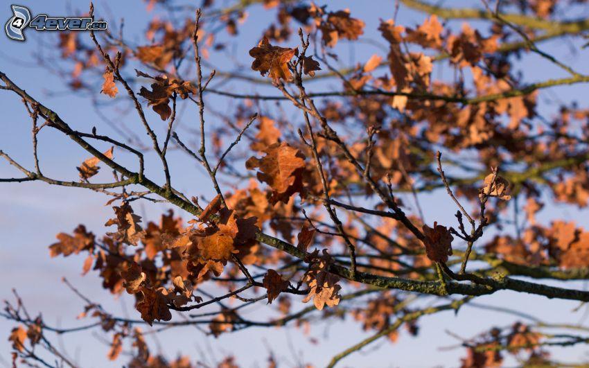 foglie secche, rami