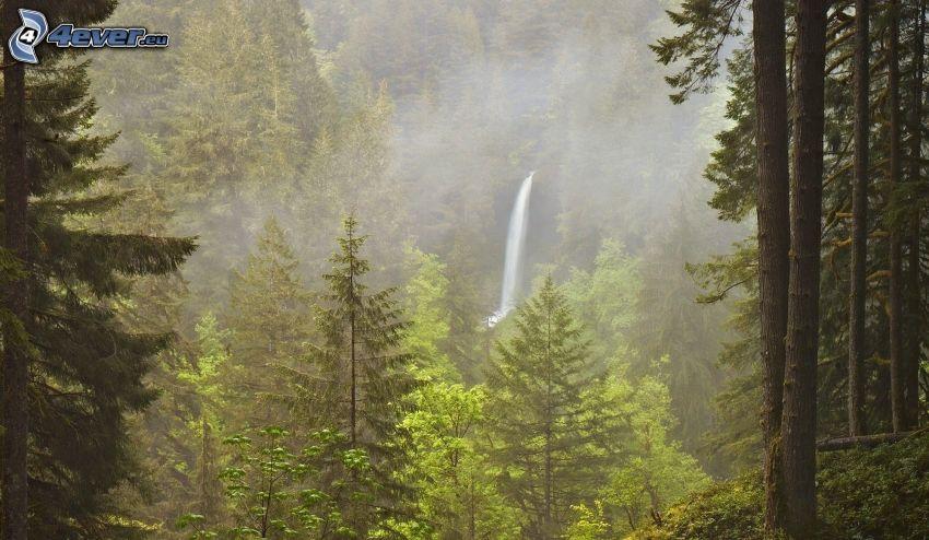 foresta, alberi di conifere, alberi frondiferi, cascata