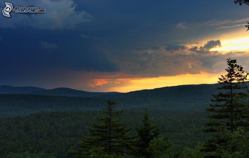 foresta, cielo di sera