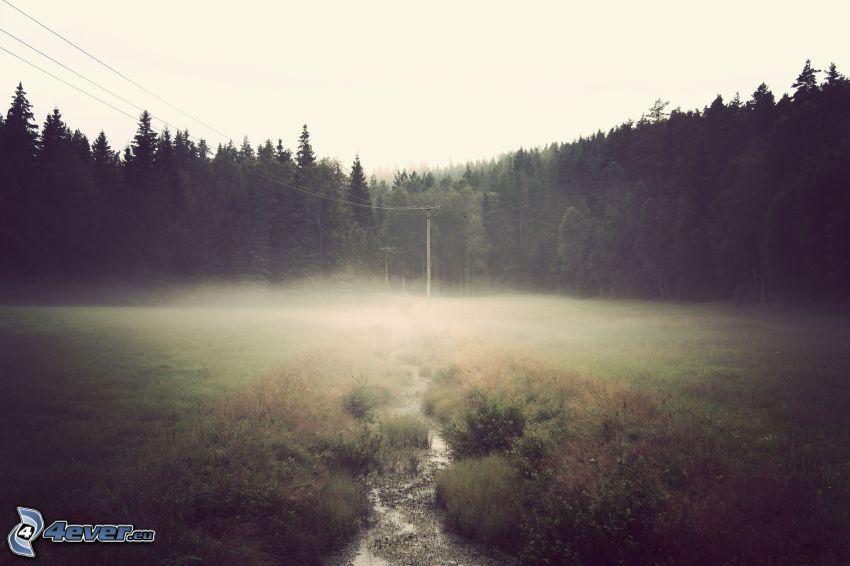 foresta, nebbia a pochi centimetri dal terreno, elettrodotto, rivo