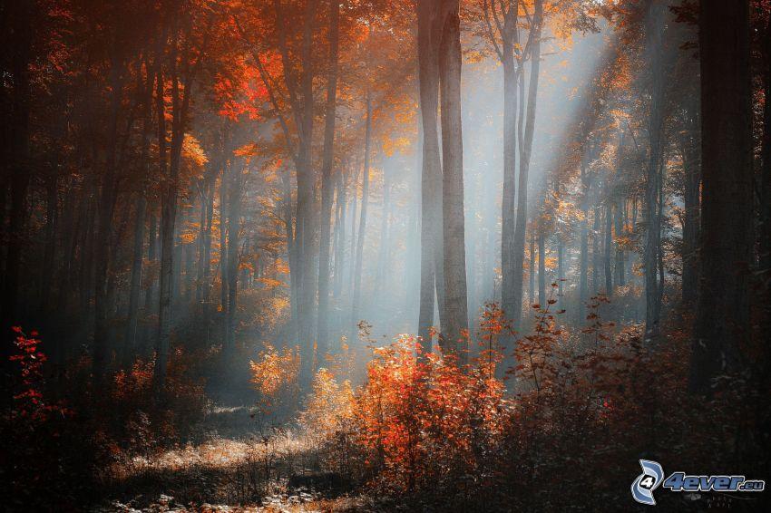 foresta, raggi del sole