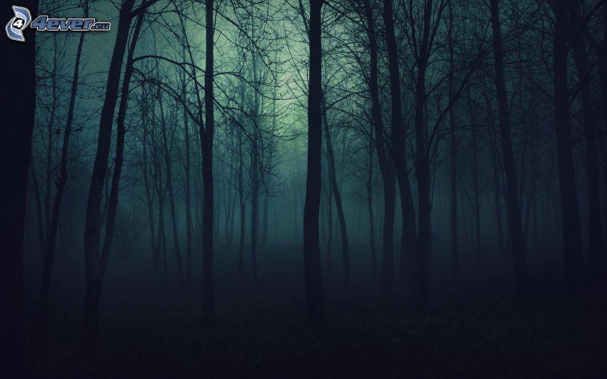 foresta notturna