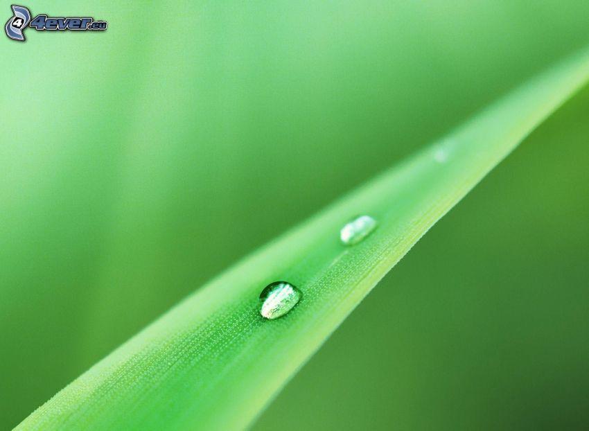 gocce d'acqua, erba, macro