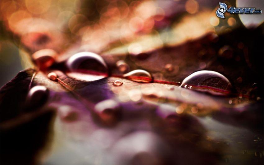 gocce d'acqua, foglia colorata