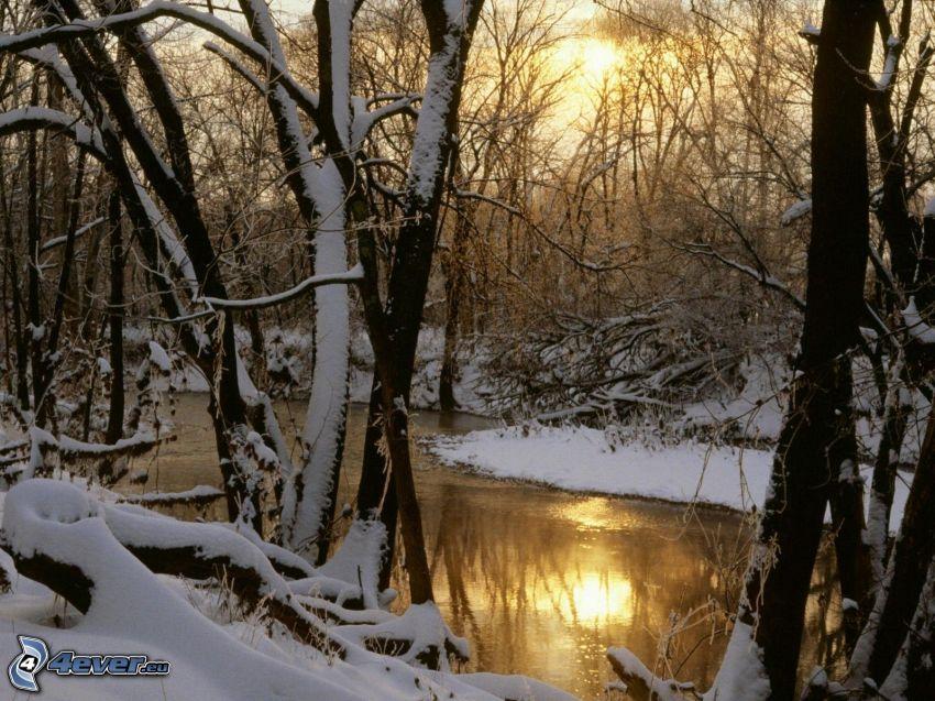 il fiume, alberi coperti di neve, sole