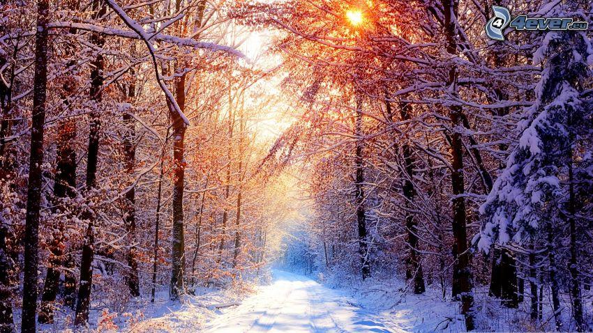 il percorso attraverso il bosco, strada innevata, sole, neve, inverno, alberi coperti di neve