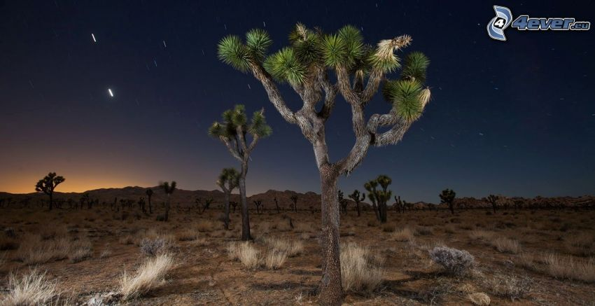 Joshua Tree National Park, alberi, cielo notturno