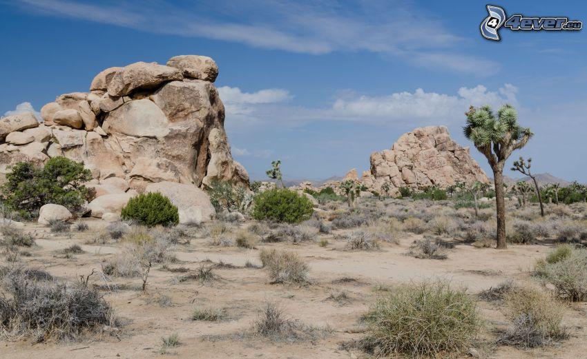 Joshua Tree National Park, rocce, alberi