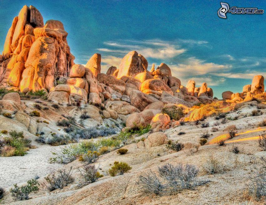 Joshua Tree National Park, rocce, cactus